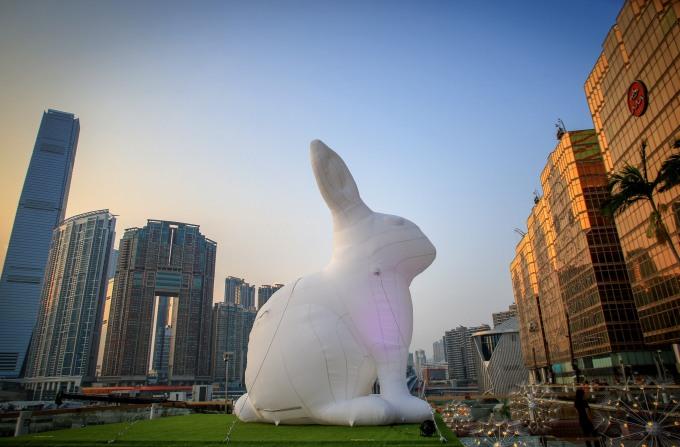 hong kong bunny